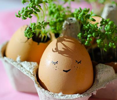 DIY egg growers 404 x 346